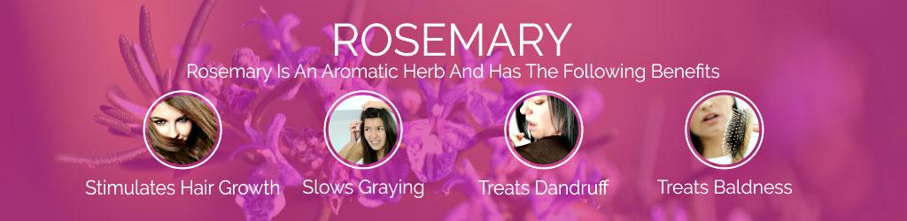 ROSEMARY-banner