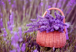 Lavender skin care products beauty products