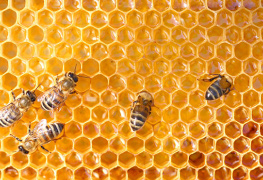 Royal Jelly supplements health products health supplements